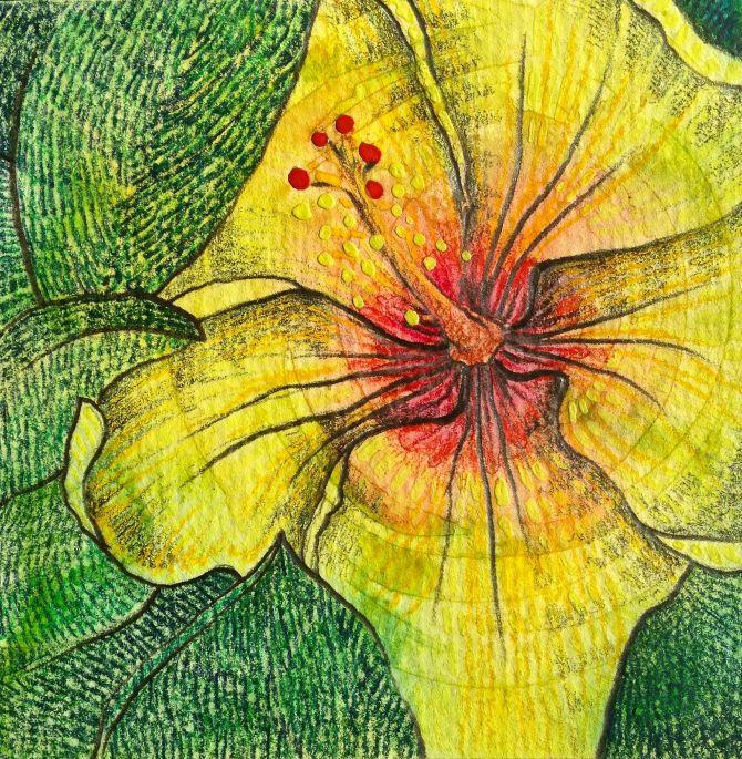 Kauai hibiscus