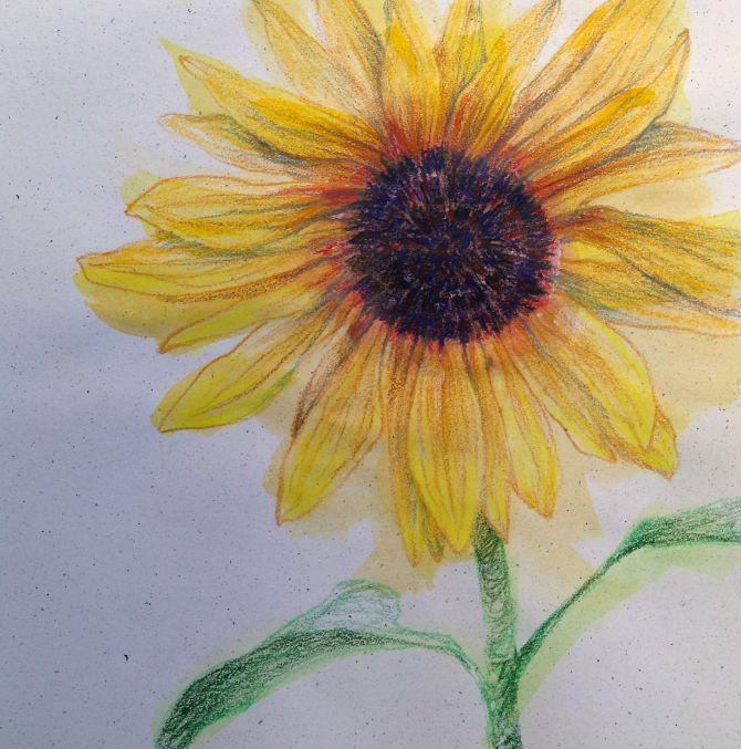 sunflowersketch