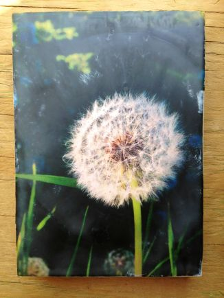 photo encaustic: image printed on light pink tissue