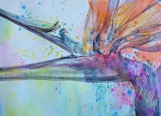 Bird of Paradise: water soluble crayon and graphite