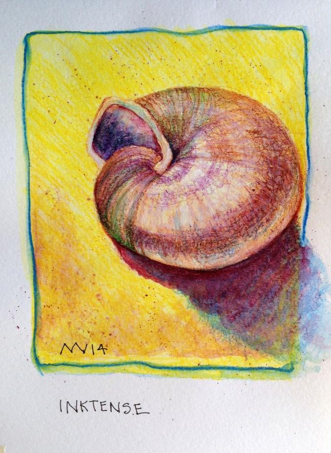 Shell Study: Derwent Inktense