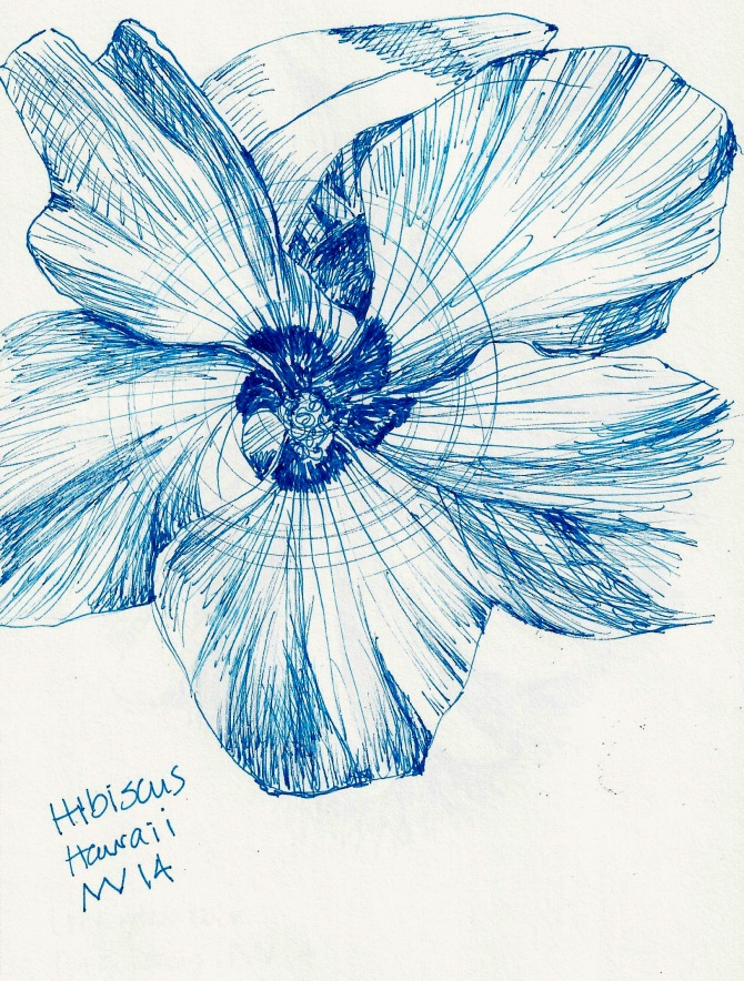 Hibiscus: blue micron ink pen