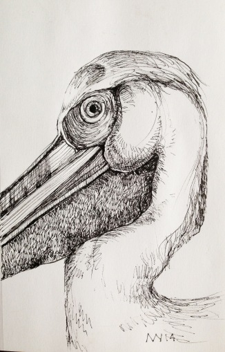micron ink pen: pelican