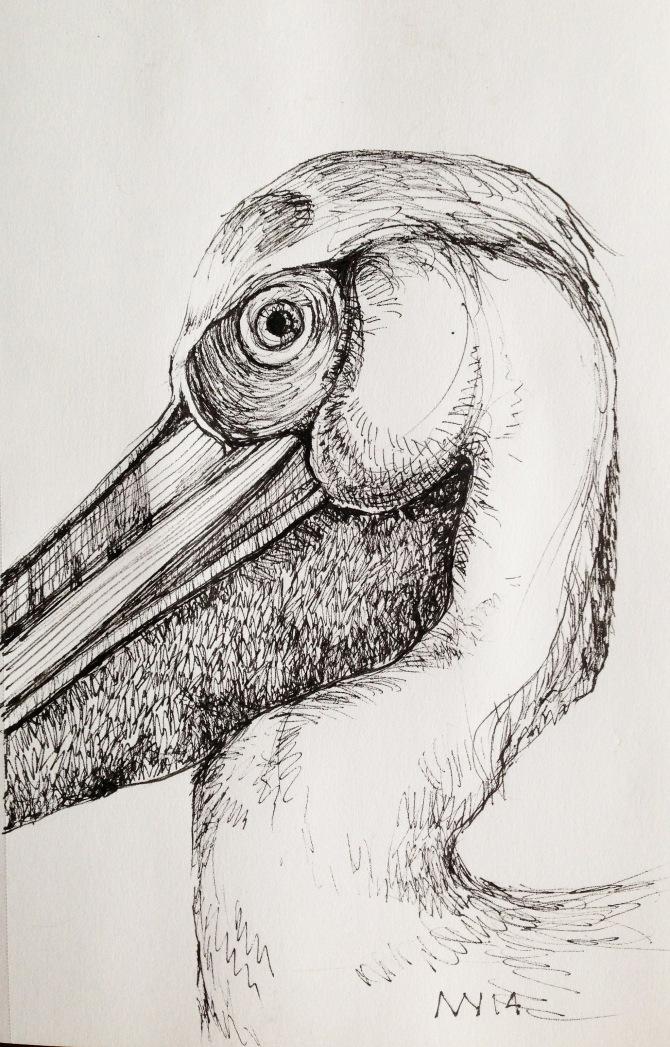 micron ink pen: pelican