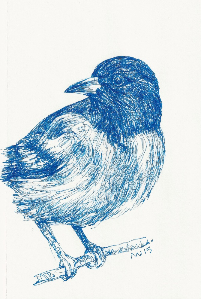 Bird in blue ink: micron pen