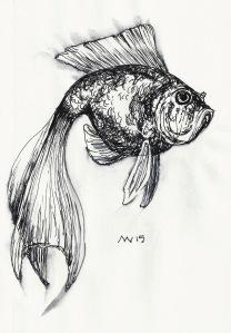 Goldfish black ink only. Quick sketch.