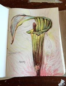 Warm-up sketch: watercolor pencil