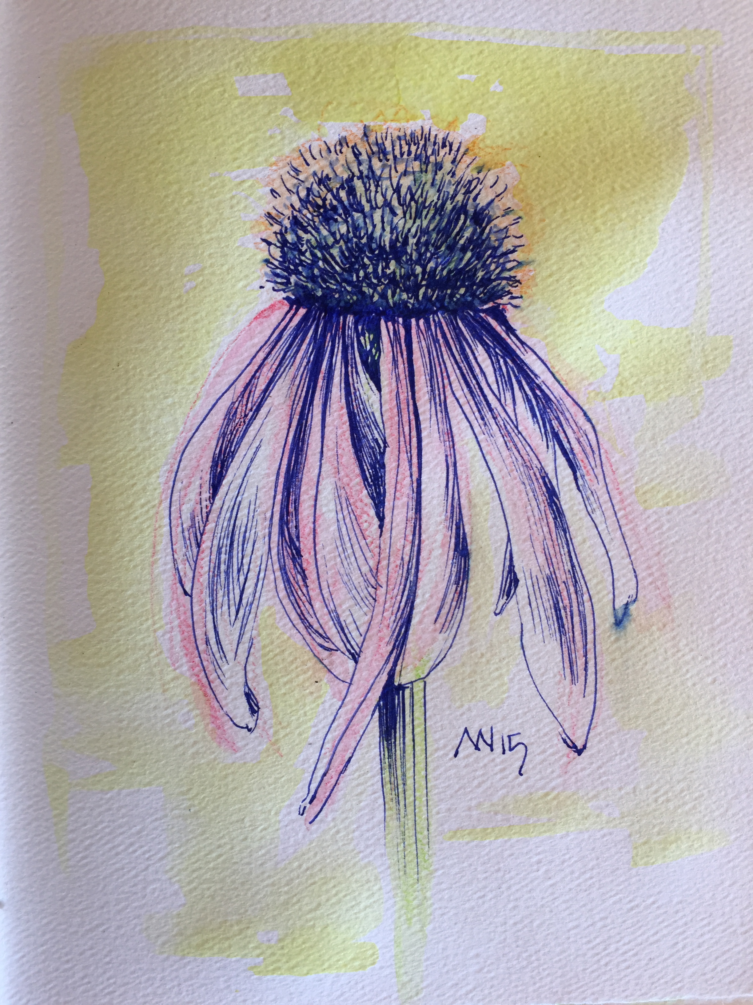 Cone Flowers | Art Projects