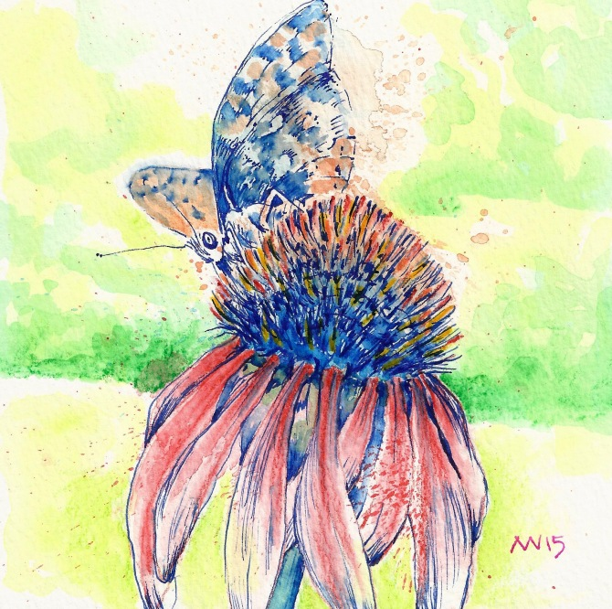 Working the cone flower: watercolor pencil and blue fountain pen